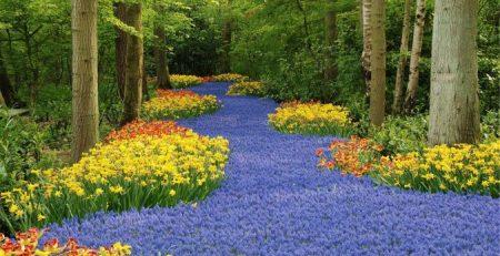 رنگ و بافت در فضای سبز