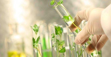 ریز ازدیادی گیاهان دارویی زینتی