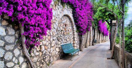 طراحی منظر گیاهی در معابر شهری