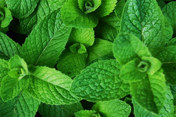 ویژگی گیاهان دارویی