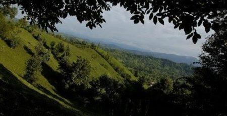 اصول جنگلداری نزدیک به طبیعت