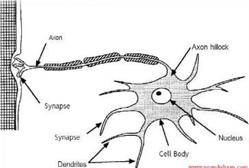 دانلود پایان نامه کارشناسی مهندسی شیمی با عنوان استفاده از شبکه عصبی مصنوعی در تخمین ضرایب دوم ویریال