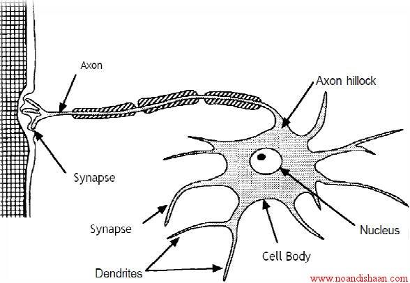 شبکه عصبي مصنوعي