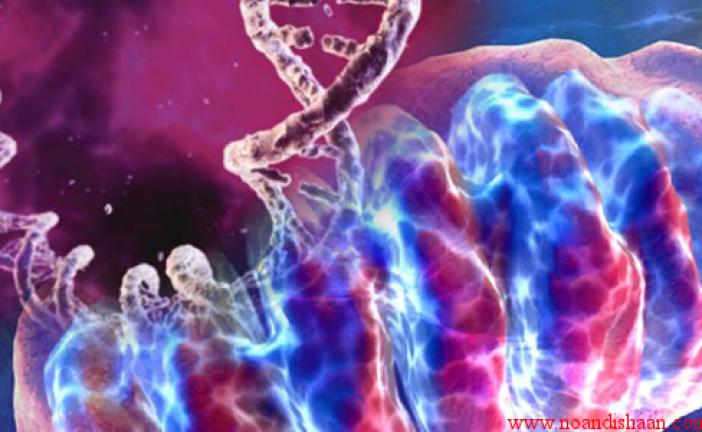 ژنهای مادری ممکن است علت طول عمر بیشتر زنان باشند