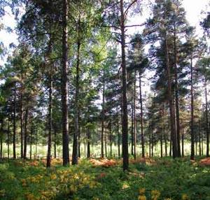 جزوه جنگلداری 1