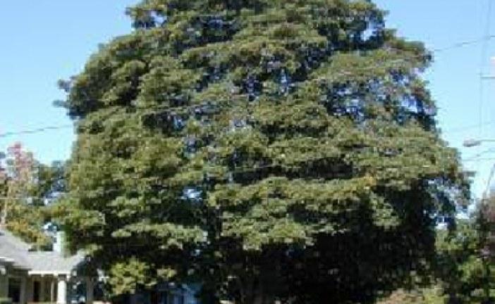 دانلود جزوه درخت شناسی 1 دکتر شیروانی
