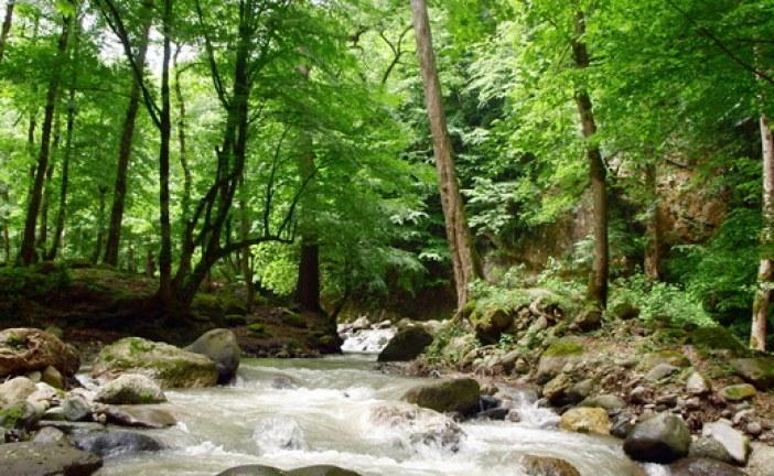 پایان نامه کارشناسی جنگلداری با عنوان تهیه طرح جنگلداری بخش پاتم جنگل آموزشی و پژوهشی خیرود نوشهر