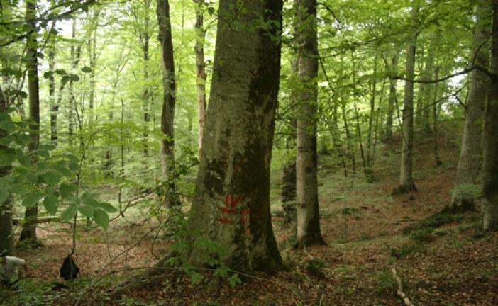 پایان نامه کارشناسی رشته مهندسی جنگلداری با عنوان تهیه طرح جنگلداری بخش گرازبن جنگل آموزشی و پژوهشی خیرود نوشهر