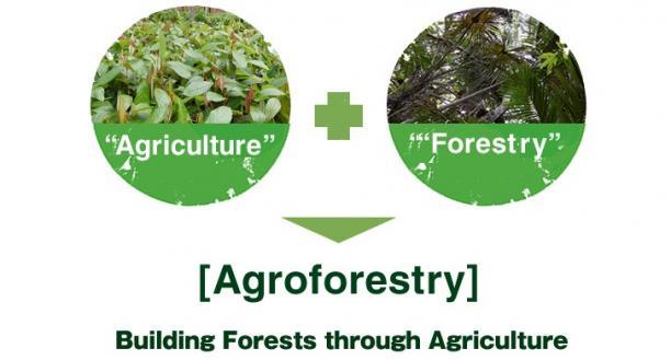 agroforestry_01.jpg