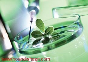 کاربردهای فن کشت بافت در گیاهان دارویی
