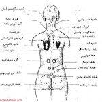 پایان نامه دکتری پزشکی عمومی با عنوان طب اسلامی