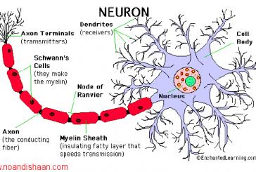 جزوه شبکه های عصبی