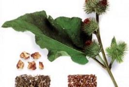 زراعت گیاهان دارویی و ادویه ای | مبحث کامل
