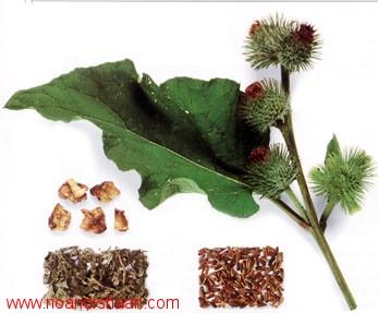 زراعت گیاهان دارویی و ادویه ای
