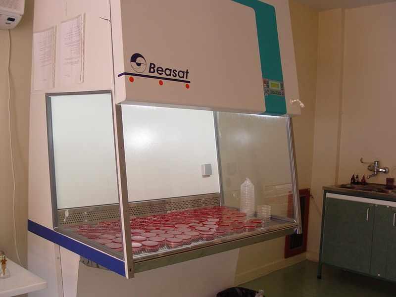 جزوه آزمایشگاه میکروبیولوژی