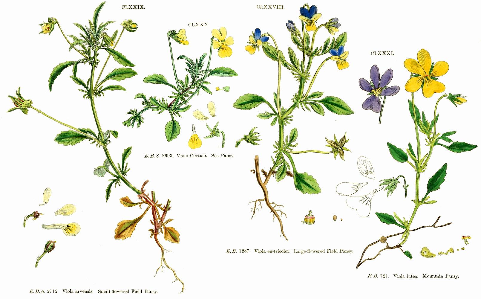 تیره های گل ها و گیاهان