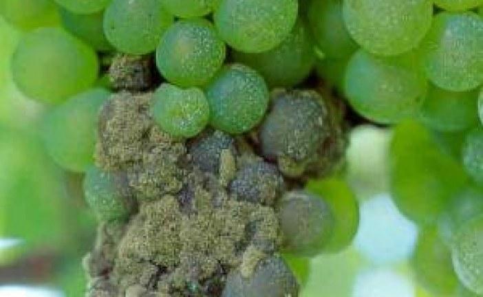 پاورپوینت کامل درباره بیماری های درختان میوه