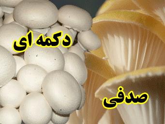 راهنمای پرورش قارچ