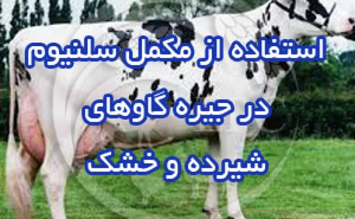 استفاده از مکمل سلنیوم در جیره گاوهای شیرده و خشک