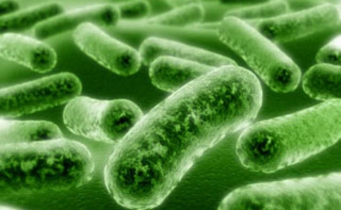 مقاله بررسی تاثیر پروبیوتیک ها در تغذیه طیور