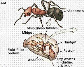 فیزیولوژی حشرات