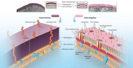 جزوه باکتری شناسی