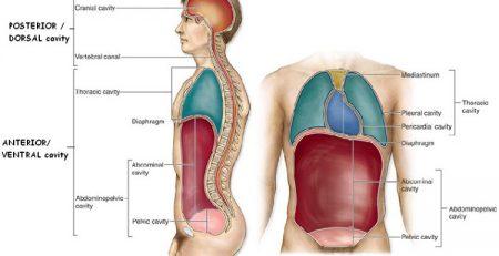 جزوه آناتومی عمومی
