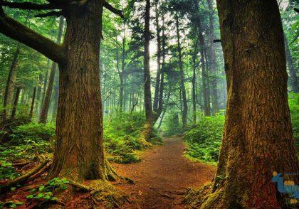 جزوه جنگلداری