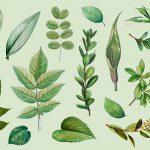 جزوه گیاه شناسی