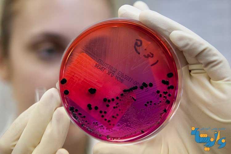 جزوه تشخیص آزمایشگاهی باکتری شناسی