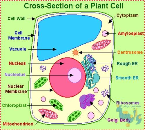 جزوه فیزیولوژی گیاهان زراعی