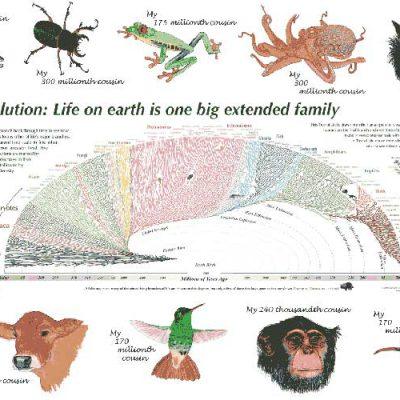جزوه تکامل موجودات زنده