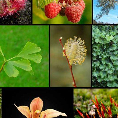 سیستماتیک گیاهی 2
